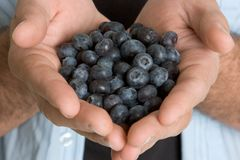 Hands Holding Blueberries Stock Photo