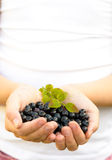 Hands Holding Blueberries Stock Images