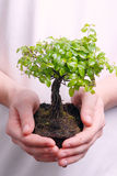 Hands holding a Bonsai tree Stock Photography