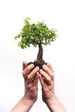 Hands holding a Bonsai tree Stock Photo