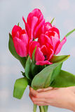 Hands holding a bouquet of pink tulips Stock Photography