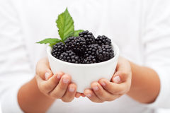 Hands holding a bowl with fresh blackberries Royalty Free Stock Photos