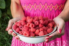 Hands holding a bowl of raspberries Stock Photography