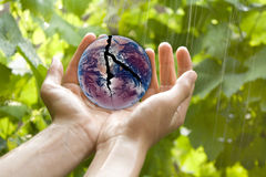 Hands holding broken earth Stock Photo