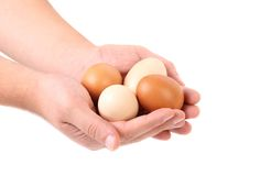 Hands holding brown eggs. Royalty Free Stock Photo