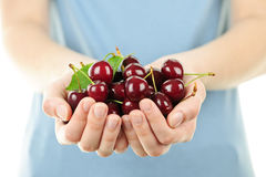 Hands holding bunch of cherries Royalty Free Stock Image