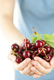 Hands holding bunch of cherries Royalty Free Stock Photography