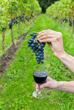 Hands holding bunch of grapes and wine glass Stock Image