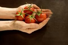 Hands holding bunch of small vine tomatoes on dark background - high angle view Stock Images