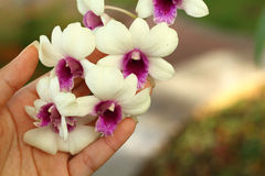 Hands are holding a bunch of white orchids. Stock Image