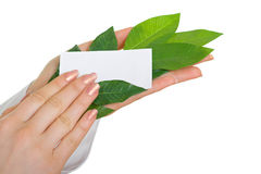 Hands holding business card on branch. In the hands of a person holding business card on branch Stock Images
