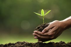 Hands holding and caring a green young plant royalty free stock images