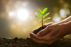Hands holding and caring a green young plant on the nature. Hands holding and caring a green young plant on nature background Royalty Free Stock Photo