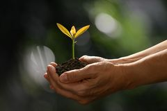 Hands holding and caring a green young plant on nature. Background Stock Photography