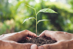 Hands holding and caring  young plant Royalty Free Stock Photography