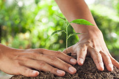 Hands holding and caring  young plant Stock Image