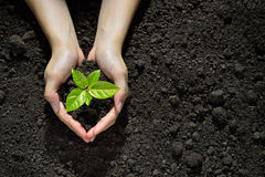 Hands holding and caring a young plant. Hands holding and caring a green young  plant Royalty Free Stock Images