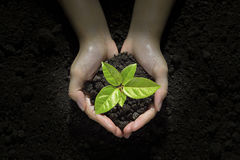 Hands holding and caring a young  plant. Hands holding and caring a green young  plant Stock Photos