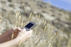 Hands Holding Cell Phone in Wheat Field Royalty Free Stock Images