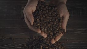Hands holding coffee beans stock footage
