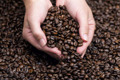 Hands holding coffee beans. Over the smooth surface of the coffee beans Stock Photo