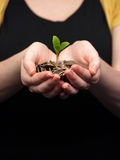 Hands Holding Coins with Sprout Stock Images