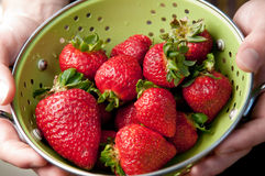 Hands Holding Colander of Strawberries Royalty Free Stock Images