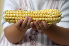 Hands holding corn cob Stock Photos