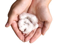 Hands holding cotton Stock Images