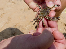 Hands holding a crab Royalty Free Stock Images