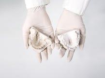 Hands holding dental gypsum models. Dental concept Royalty Free Stock Image