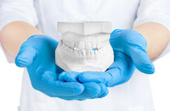 Hands holding dental gypsum models, dental concept Stock Photography