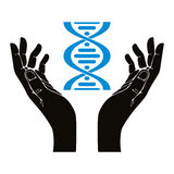 Hands holding DNA strand. Royalty Free Stock Images