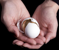 Hands Holding Egg Stock Photos