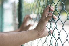 Hands holding fence royalty free stock photo