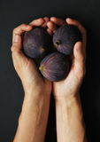 Hands holding figs. Close up isolated beautiful photo Stock Photography