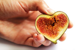 Hands holding figs in heart shape. Close up isolated beautiful photo Royalty Free Stock Images