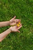Hands holding flower. Human hands holding yellow flowers on green grass background Stock Photo