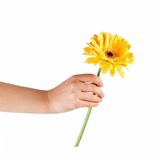 Hands holding flower Stock Photo