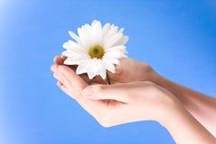 Hands holding flower stock image