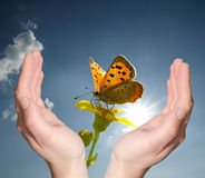 Hands holding flower butterfly Stock Images
