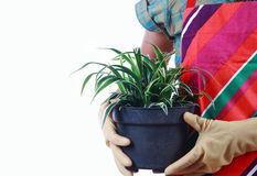 Hands holding flowerpot isolated on white background Stock Photo