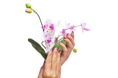 Hands holding flowers Royalty Free Stock Image