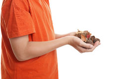 Hands holding fragrant bush pot pouri Royalty Free Stock Images