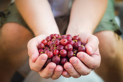 Hands holding fresh air gooseberry fruit Stock Images