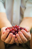 Hands holding fresh air gooseberry fruit Stock Image