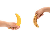 Hands holding a fresh banana up and a over-ripe one down like mens penis as potency concept Royalty Free Stock Photos