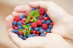 Hands holding fresh berries Stock Photo