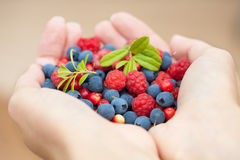 Hands holding fresh berries Stock Images