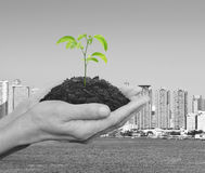Hands holding a fresh small plant with soil over black and white Stock Photography